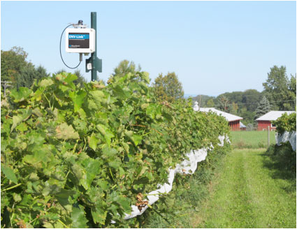 Shelburne Vineyard ENV-Link remotely monitoring temperature, relative humidity, solar radiation, soil moisture, and leaf wetness. © MicroStrain, Inc.